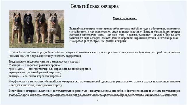 Чем кормить взрослую собаку и щенка