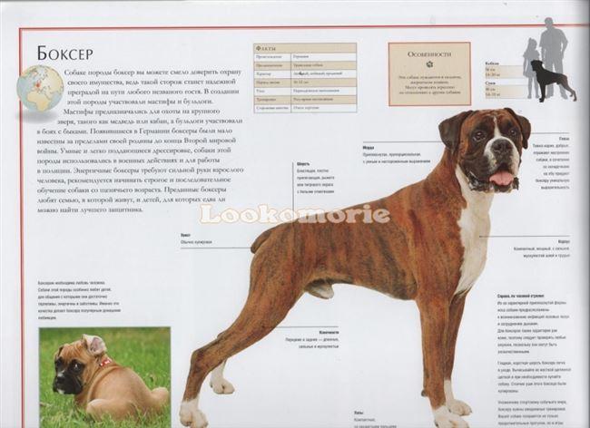 Рацион питания для собаки боксер