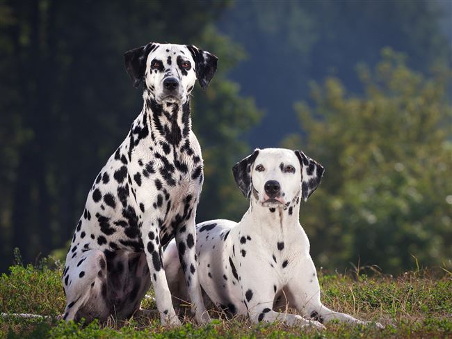 Похожие породы собак