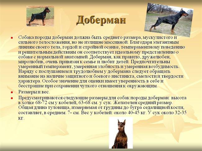 История породы доберман