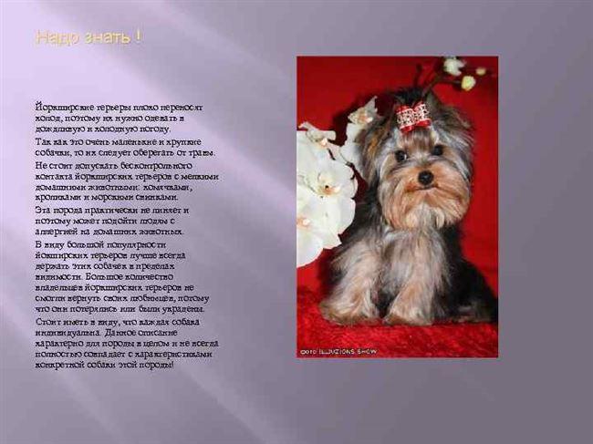Основные правила ухода за взрослой собакой