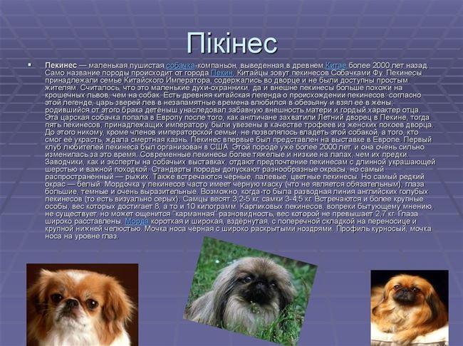 Готовые корма для собак