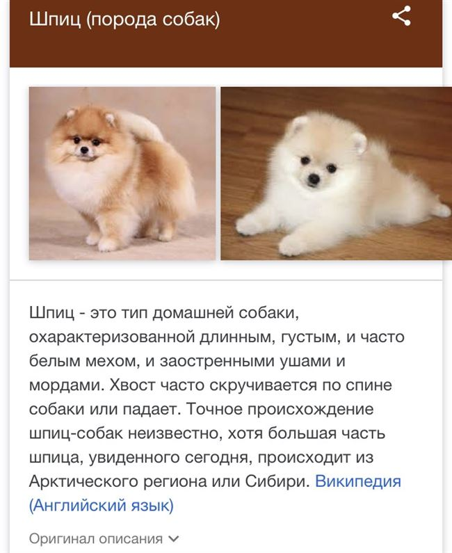 Питание взрослой собаки